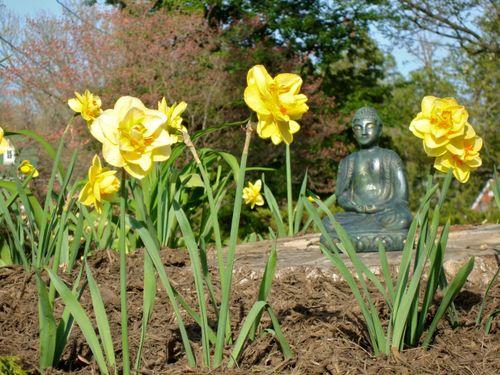 Magical Mystery Buddha